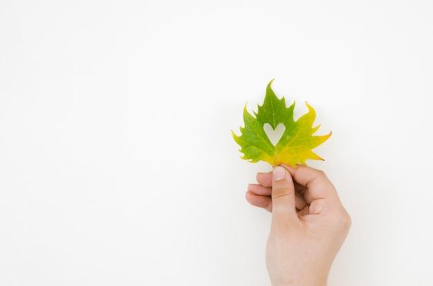 Hoogste meningshanden die de herfstbladeren houden Gratis Foto