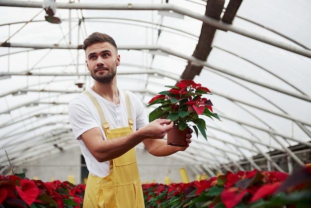 Houd een vaas vast en raak de bladeren aan. portret van mooie jonge kerel in de broeikas die voor bloemen zorgt. Premium Foto