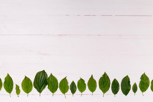 Houten achtergrond met bladeren bosregeling Gratis Foto