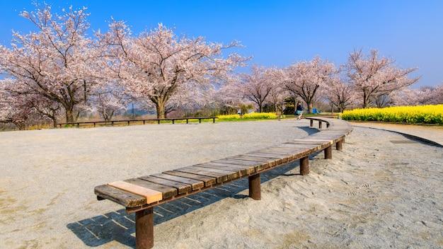 Houten lijst en sakuratuin met gele bloem in japan Premium Foto
