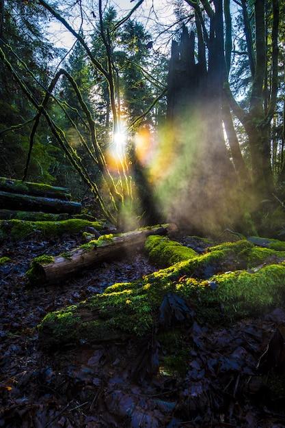 Houten logboeken bedekt met groene mos in een bos met felle zonnestralen in de Gratis Foto