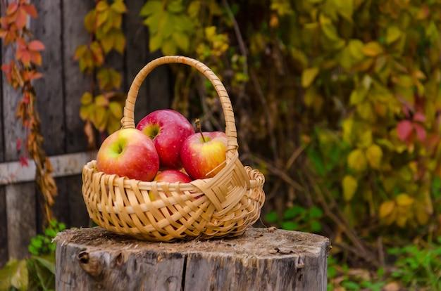 Houten rieten mand met rode sappige appelen op stomp tegen een oud hek met wilde druiven Premium Foto