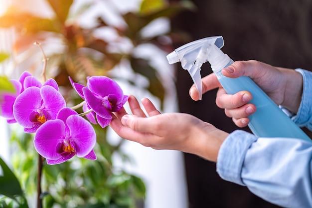 Huisvrouw die thuis planten verzorgt en orchideebloem bespuit met zuiver water uit een spuitfles Premium Foto