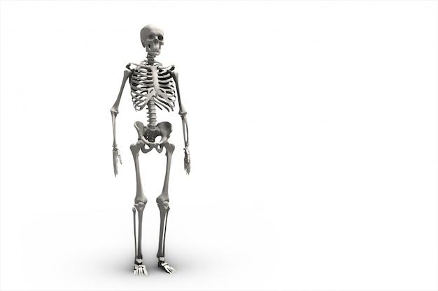 Illustratie van een menselijk skelet 3d-rendering Premium Foto