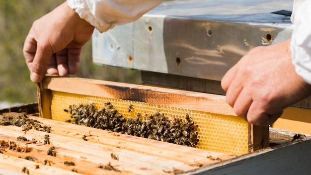 Imker die honing haalt Gratis Foto
