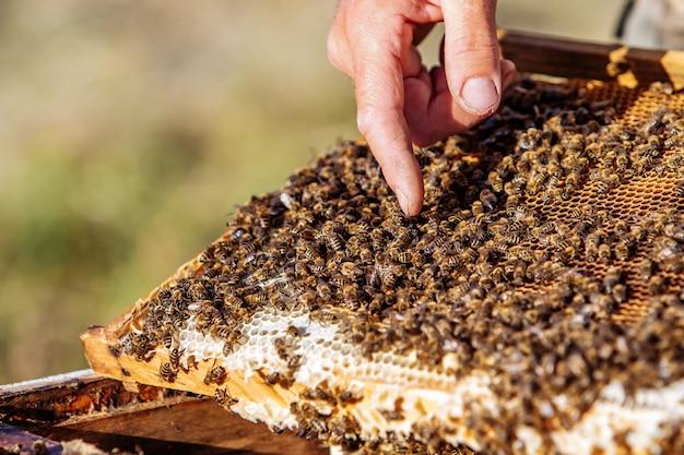 Imker met de honingraat in het frame. imker op het werk. frames van een bijenkorf. bijenteelt concept Premium Foto