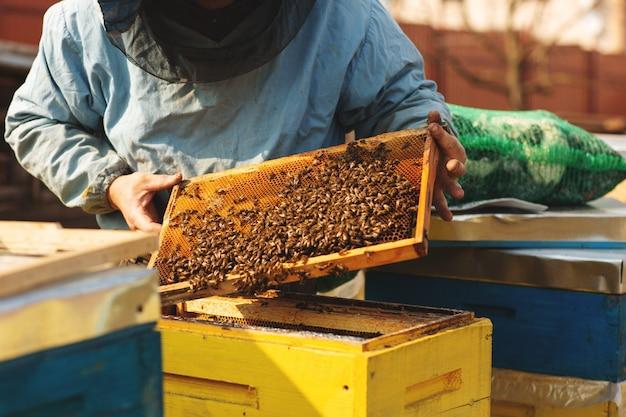Imker werkt met bijen en inspecteert bijenkorf na de winter Premium Foto