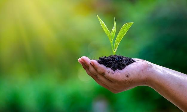 In de handen van bomen die zaailingen kweken. Premium Foto