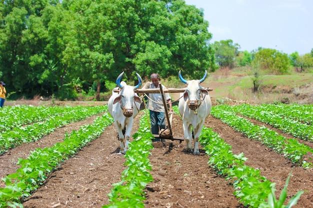 Indiase landbouwtechniek Premium Foto