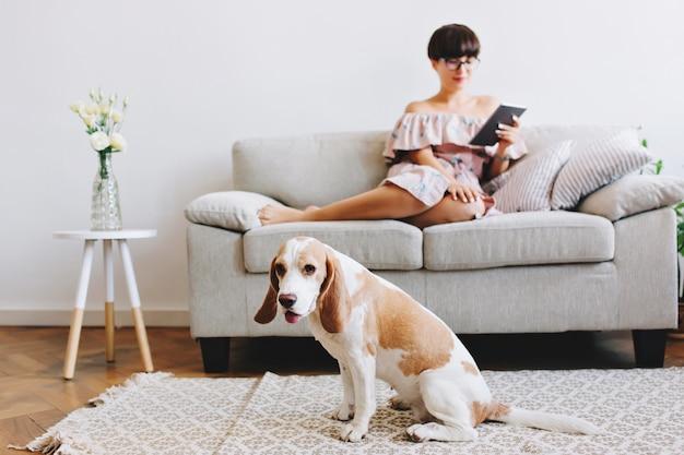 Indoor portret van elegante zwartharige meisje ontspannen op de bank met schattige beagle hond op voorgrond Gratis Foto