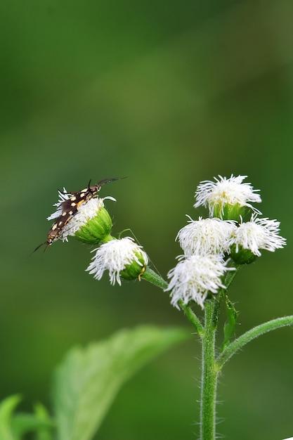 Insecten op bloemen Premium Foto