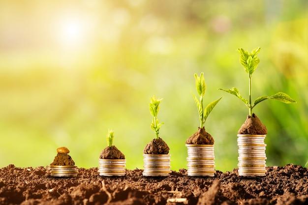 Installatie die op muntstukken gloeit die met groen en zonlicht stapelen. financieel en investeringsconcept. Premium Foto