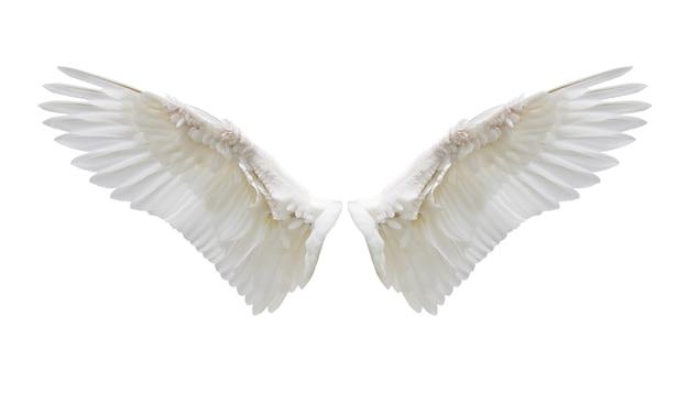 Intern wit vleugelveren Premium Foto