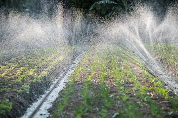 Irrigatiesysteem op het water geven in de plantaardige aanplanting Premium Foto