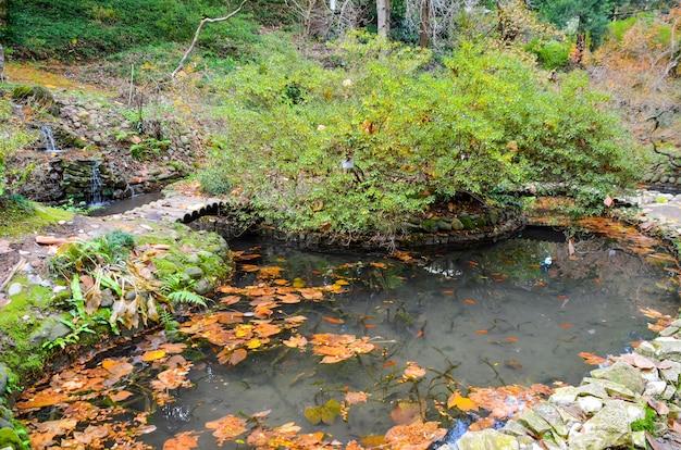 Japanse binnenplaats in de botanische tuin in de herfst. batumi. Premium Foto