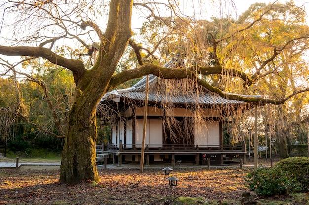 Japanse herfst herfst. kyoto daigoji-tempel. Premium Foto