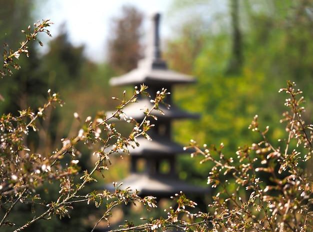 Japanse tuin. begin van de bloei in het voorjaar. lente bloem achtergrond. de eerste sleutelbloemen in de lentezon. Premium Foto
