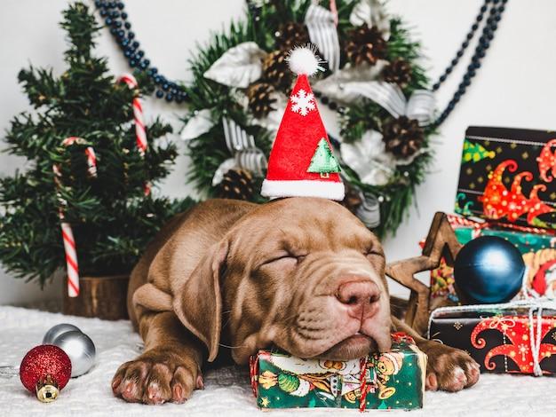 Jonge, charmante puppy en een feestelijke doos Premium Foto