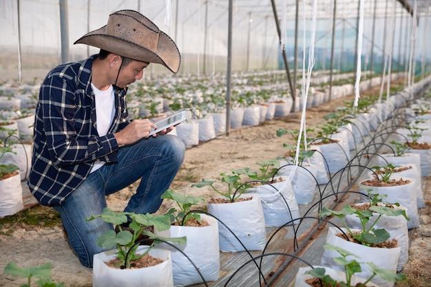 Jonge groene meloen of meloen groeien in de serre Gratis Foto
