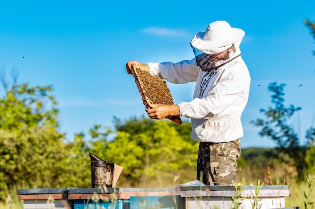 Jonge imker bezig met zijn bijenstal en het verzamelen van honing uit bijenkorven. bijen op honingraat Premium Foto