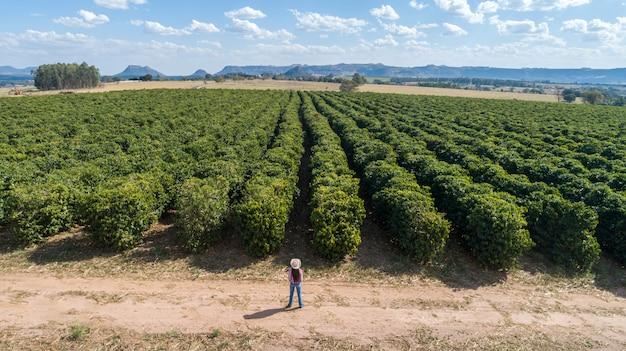 Jonge landbouwersvrouw die haar koffieaanplanting controleert Premium Foto