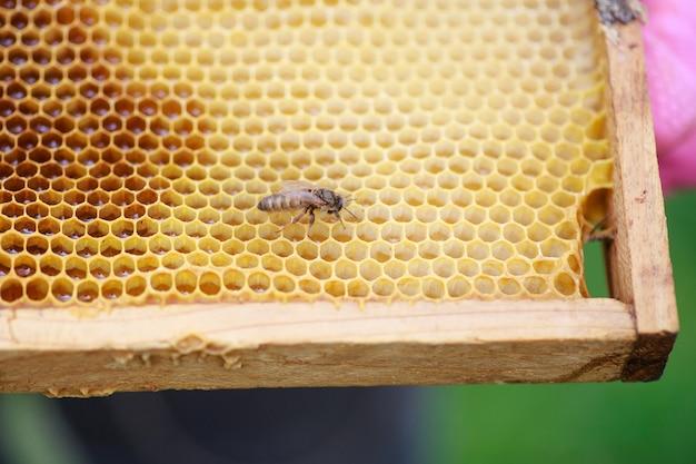 Jonge net geboren bijenkoningin op frame met honing Premium Foto