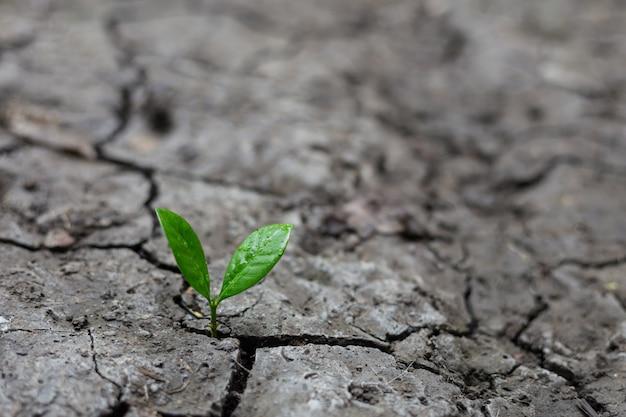 Jonge plant het groeien in het ochtendlicht met groene aard. Premium Foto