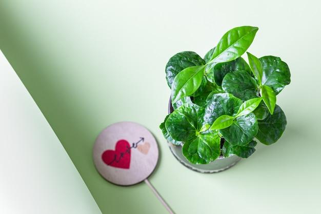 Jonge scheut van een koffieboom met liefdetopper. koffie winkel concept. liefde of valentijnsdag concept. Premium Foto