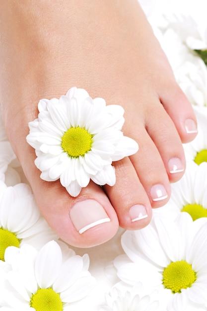 Jonge schoonheid pure vrouwelijke voet met kamille bloem eromheen Gratis Foto