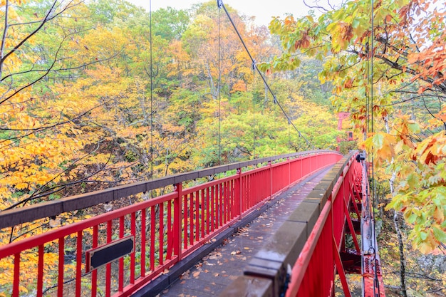 Jozankei futami hangbrug en herfstbos Premium Foto