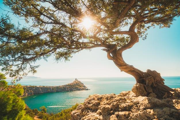 Juniper bonsai boom op de rand van een klif met de zon in de takken Premium Foto
