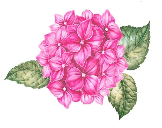 Kaart van roze hortensia bloemen. Premium Foto