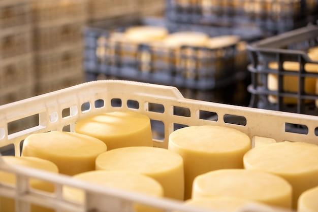 Kaas gerangschikt in dozen in het magazijn van de kaasfabriek. Premium Foto