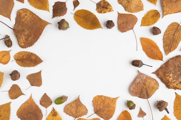 Kadersamenstelling met gevallen bladeren en eikels Gratis Foto