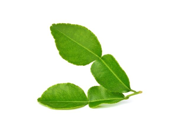 Kaffirkalkbladeren of bergamotblad op wit Premium Foto