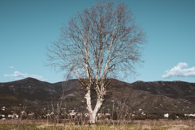 Kale boom in een veld met bergen Gratis Foto