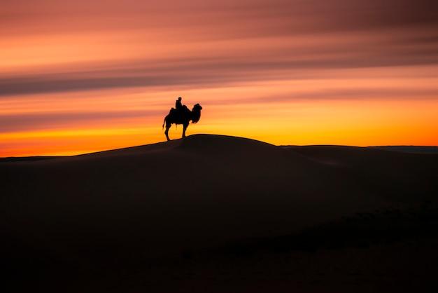 Kameel die door de zandduinen gaat bij zonsopgang, de woestijn mongolië van gobi. Premium Foto