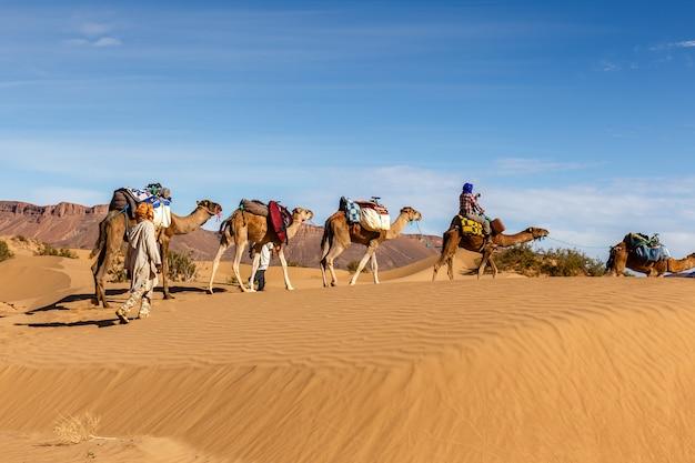 Kameelcaravan in de woestijn van de sahara Premium Foto
