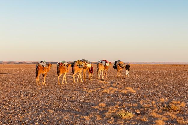 Kameelcaravan op de woestijn Premium Foto