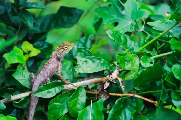 Kameleon die op boom beklimt die op jachtinsect wacht Premium Foto