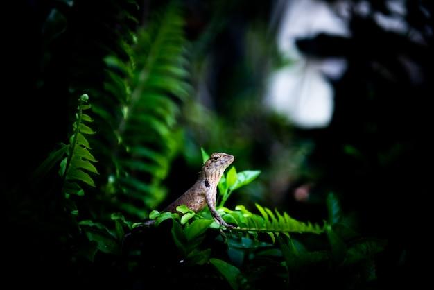 Kameleon op boom met schijnwerper op het, wildernisconcept Premium Foto