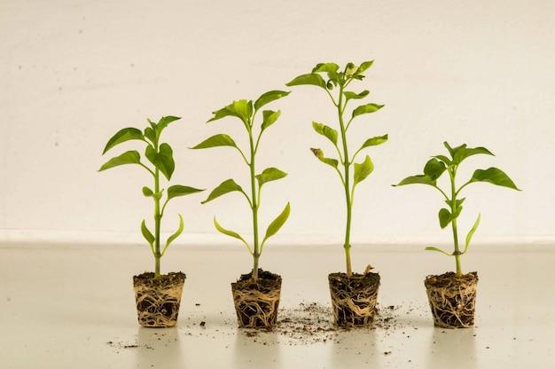 Kamerplanten groeien naast elkaar in een kamer Gratis Foto