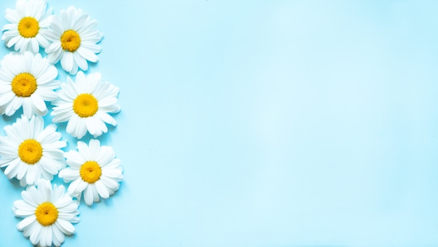 Kamille bloemen op pastel blauwe achtergrond met bovenaanzicht en kopie ruimte. Premium Foto