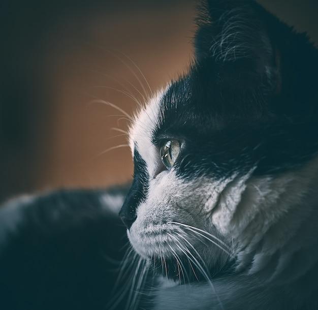 Kat die aan één kant met detail in oog kijkt Premium Foto