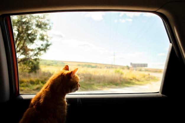 Kat die op achterbank situeert en naar buiten kijkt Gratis Foto