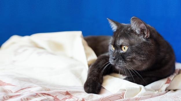 Kat die op de deken legt Premium Foto