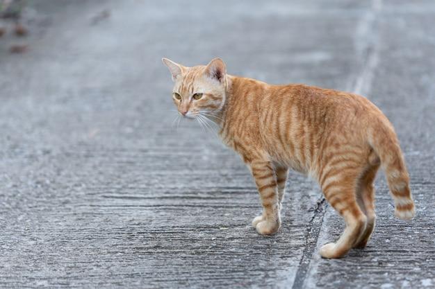 Kat die op de straat loopt. Gratis Foto