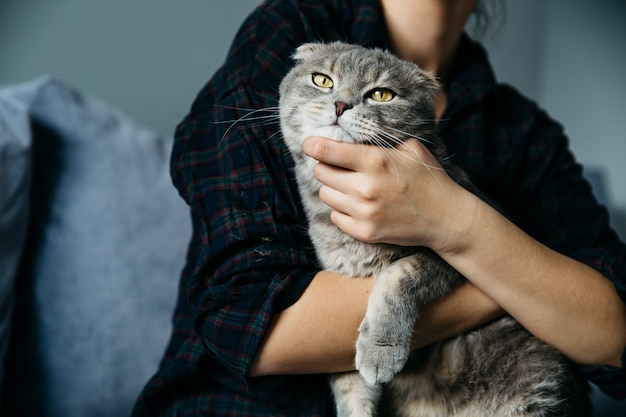 Kat die van liefkozing van gastvrouw geniet Gratis Foto