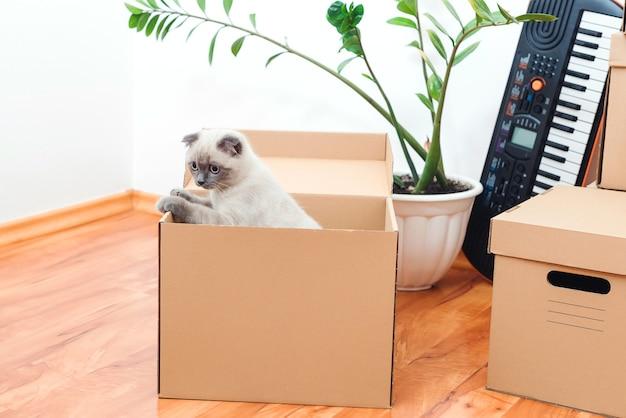Kat in een doos in nieuw huis. verpakte huishoudelijke spullen om naar een nieuw huis te verhuizen. dieren, verhuizing en verhuisconcept. Premium Foto