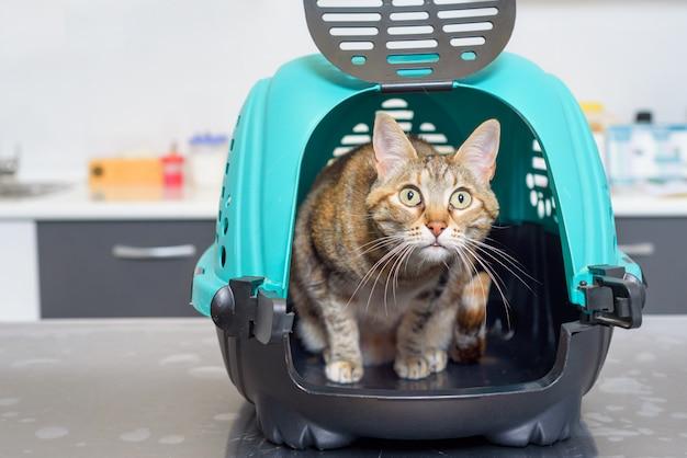 Kat in kennel bij veterinaire kliniek   Premium Foto